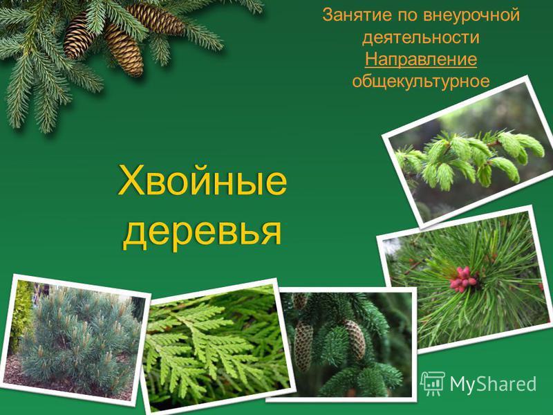 Занятие по внеурочной деятельности Направление общекультурное Хвойные деревья