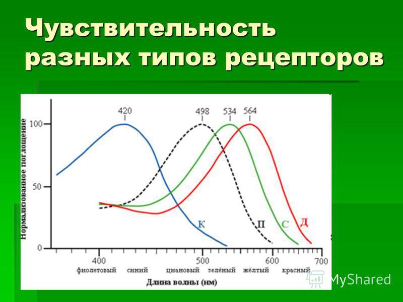 Чувствительность разных типов рецепторов