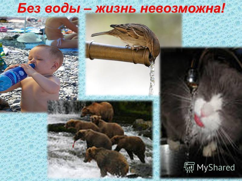 Без воды – жизнь невозможна!
