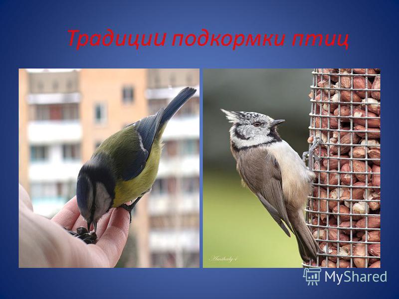 Традици и подкормки птиц