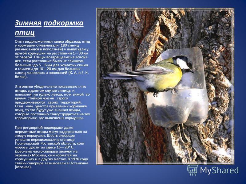 Зимняя подкормка птиц Опыт видоизменялся таким образом: птиц у кормушки отлавливали (180 синиц разных видов и поползней) и выпускали у другой кормушки на расстоянии 130 км от первой. Птицы возвращались в «свой» лес, если расстояние было не слишком бо
