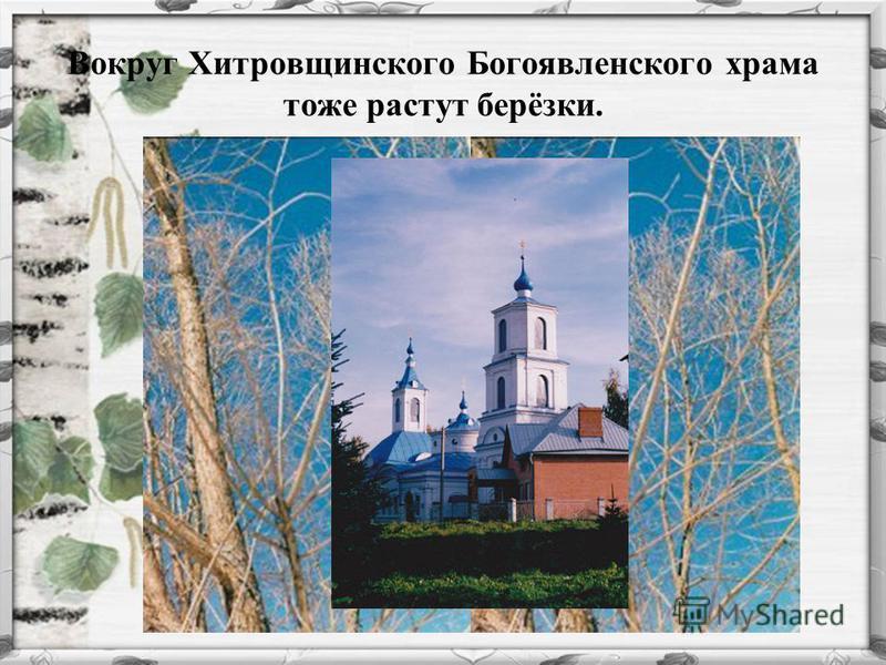Вокруг Хитровщинского Богоявленского храма тоже растут берёзки.