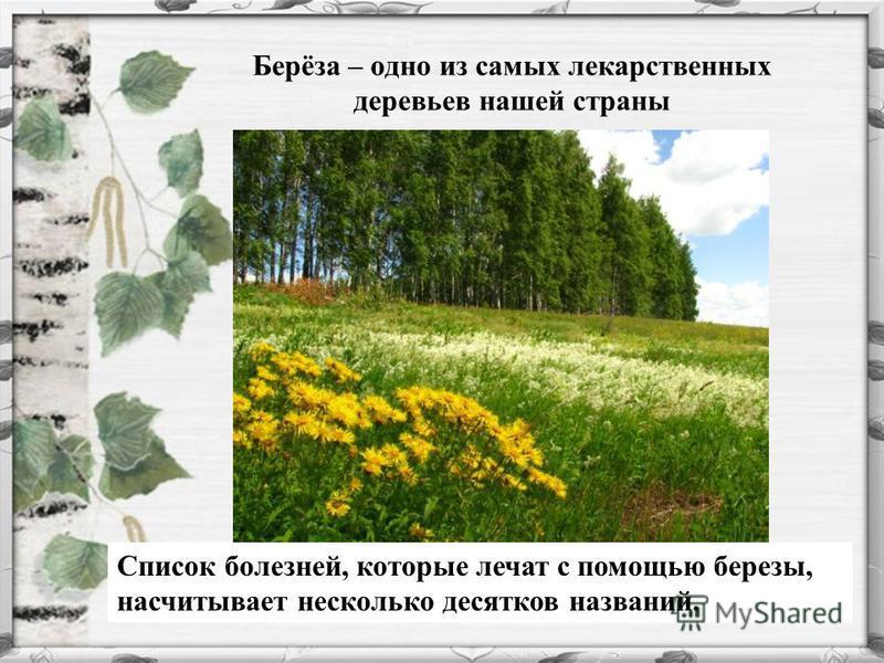 Берёза – одно из самых лекарственных деревьев нашей страны Список болезней, которые лечат с помощью березы, насчитывает несколько десятков названий.