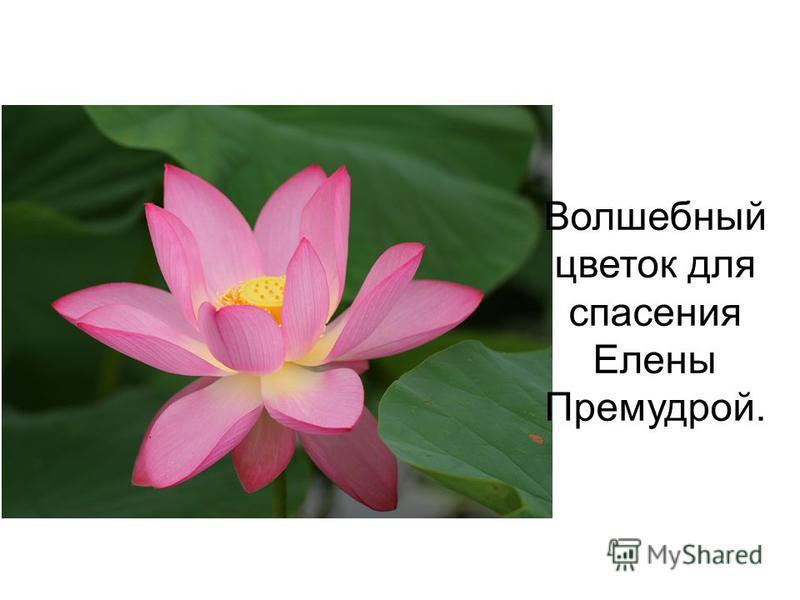 Волшебный цветок для спасения Елены Премудрой.