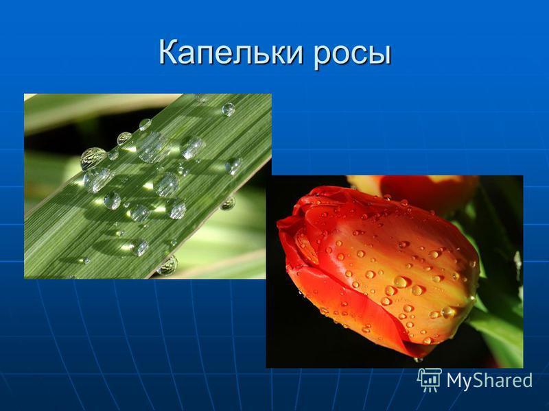 Капельки росы