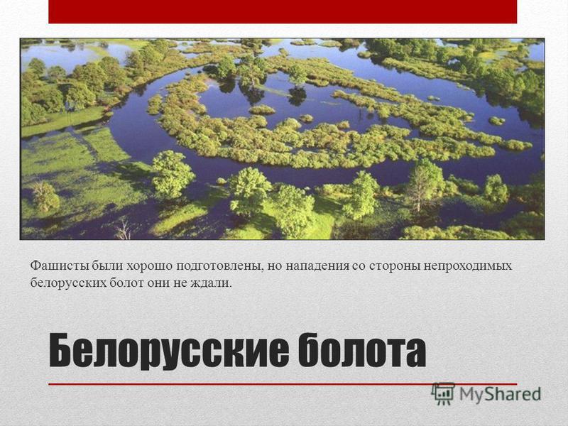Белорусские болота Фашисты были хорошо подготовлены, но нападения со стороны непроходимых белорусских болот они не ждали.