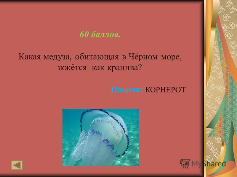 60 баллов. Какая медуза, обитающая в Чёрном море, жжётся как крапива? Ответ: КОРНЕРОТ