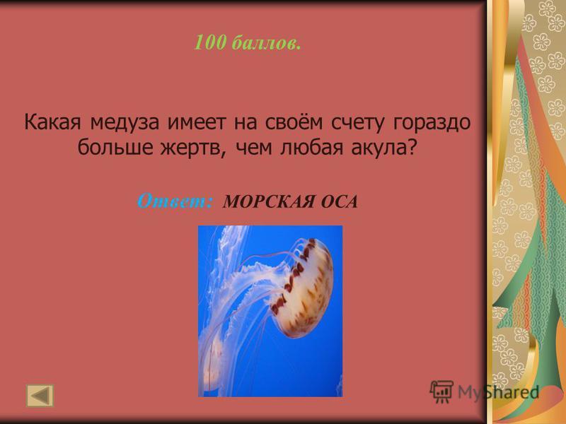 100 баллов. Какая медуза имеет на своём счету гораздо больше жертв, чем любая акула? Ответ: МОРСКАЯ ОСА