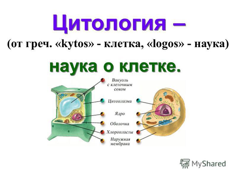 Цитология – наука о клетке. наука о клетке. (от греч. «kytos» - клетка, «logos» - наука)