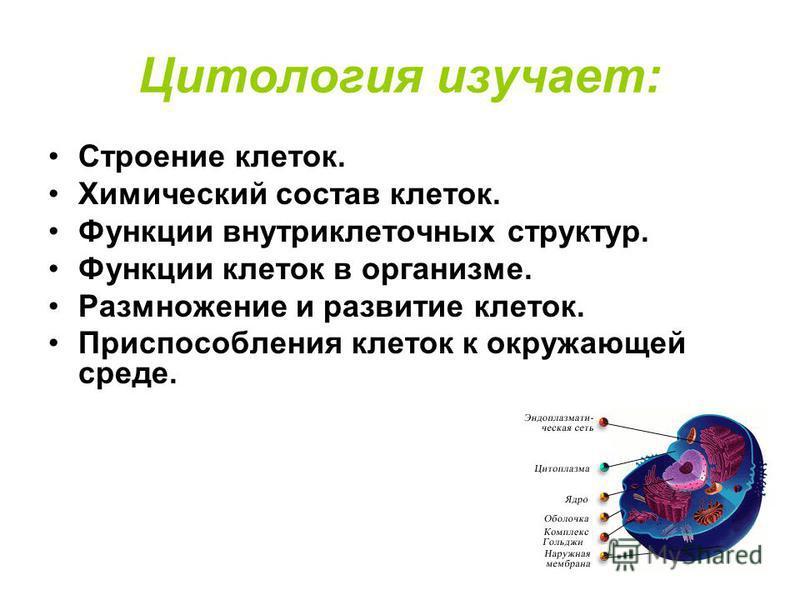 Цитология изучает: Строение клеток. Химический состав клеток. Функции внутриклеточных структур. Функции клеток в организме. Размножение и развитие клеток. Приспособления клеток к окружающей среде.
