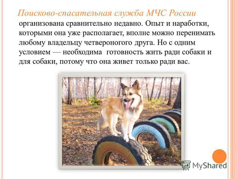 Поисково-спасательная служба МЧС России организована сравнительно недавно. Опыт и наработки, которыми она уже располагает, вполне можно перенимать любому владельцу четвероногого друга. Но с одним условием необходима готовность жить ради собаки и для