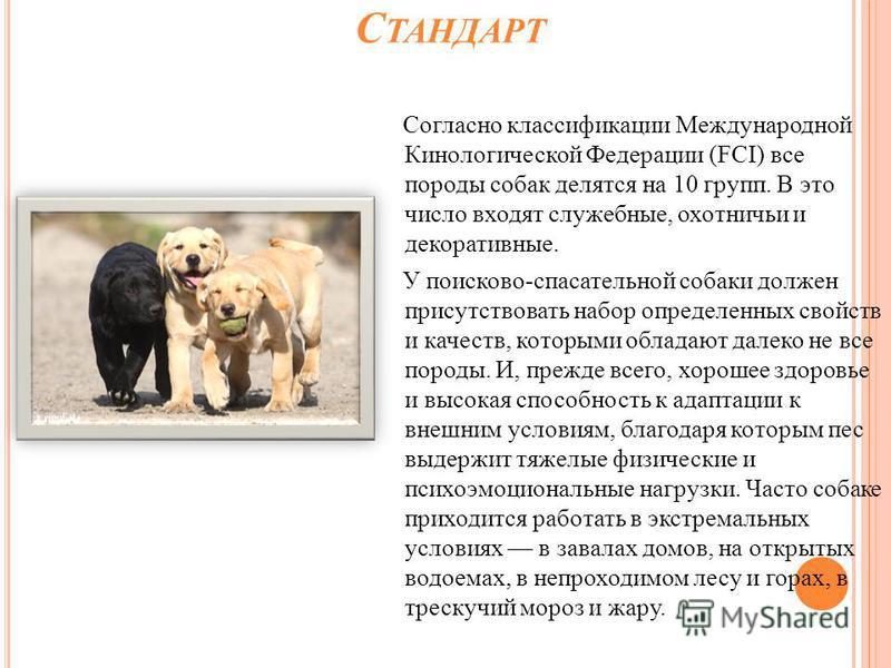 С ТАНДАРТ Согласно классификации Международной Кинологической Федерации (FCI) все породы собак делятся на 10 групп. В это число входят служебные, охотничьи и декоративные. У поисково-спасательной собаки должен присутствовать набор определенных свойст