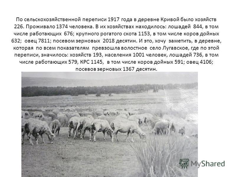 По сельскохозяйственной переписи 1917 года в деревне Кривой было хозяйств 226. Проживало 1374 человека. В их хозяйствах находилось: лошадей 844, в том числе работающих 676; крупного рогатого скота 1153, в том числе коров дойных 632; овец 7811; посево