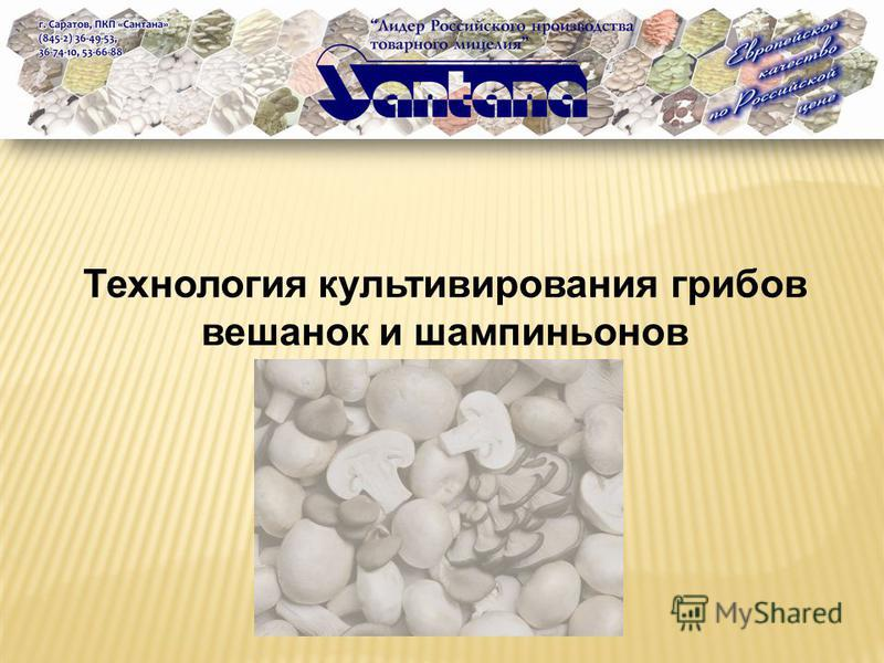 Технология культивирования грибов вешенок и шампиньонов