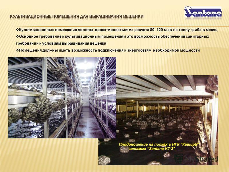 Культивационные помещения должны проектироваться из расчета 80 -120 м.кв на тонну гриба в месяц Основное требование к культивационным помещениям это возможность обеспечения санитарных требований к условиям выращивания вешенки Помещения должны иметь в