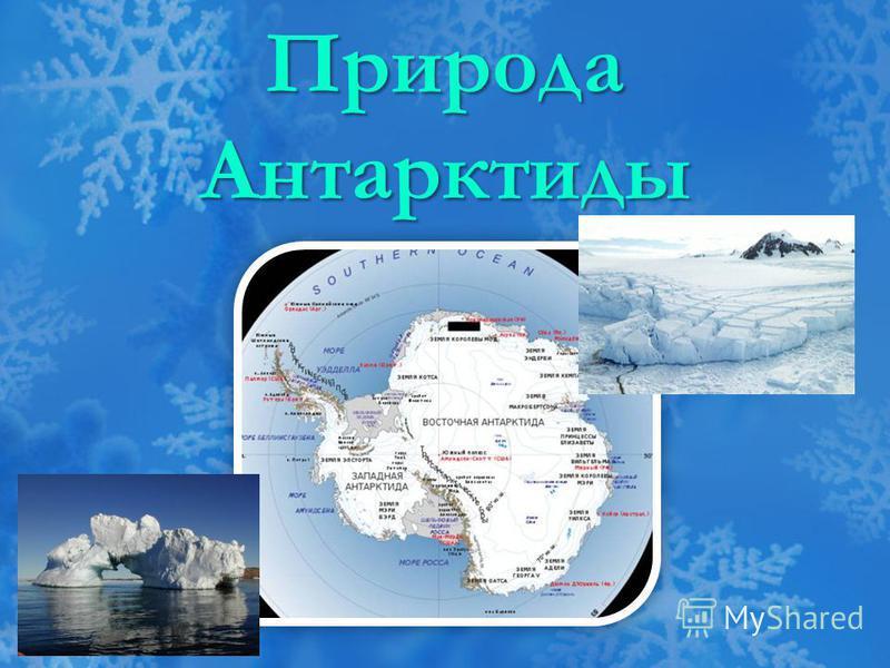 Природа Антарктиды