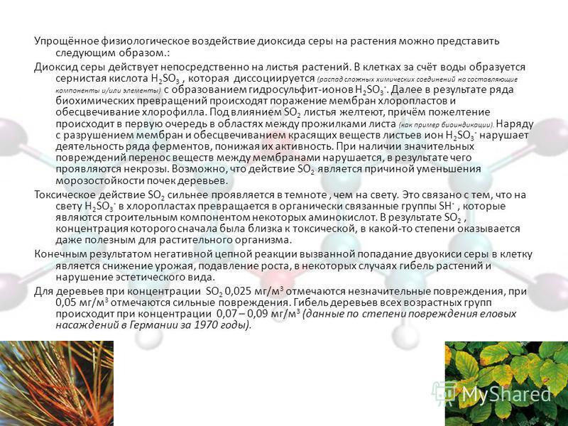 Упрощённое физиологическое воздействие диоксида серы на растения можно представить следующим образом.: Диоксид серы действует непосредственно на листья растений. В клетках за счёт воды образуется сернистая кислота H 2 SO 3, которая диссоциируется (ра