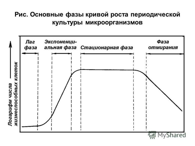 Рис. Основные фазы кривой роста периодической культуры микроорганизмов