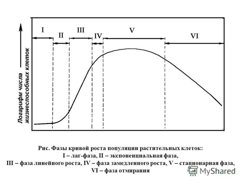 Рис. Фазы кривой роста популяции растительных клеток: I – лаг-фаза, II – экспоненциальная фаза, III – фаза линейного роста, IV – фаза замедленного роста, V – стационарная фаза, VI – фаза отмирания