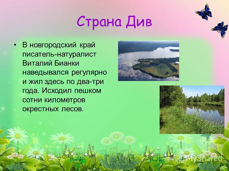 Страна Див В новгородский край писатель-натуралист Виталий Бианки наведывался регулярно и жил здесь по два-три года. Исходил пешком сотни километров окрестных лесов.