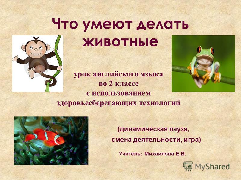 Животные На Английском Языке Презентация