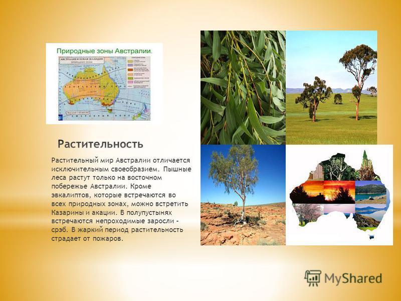Растительный мир Австралии отличается исключительным своеобразием. Пышные леса растут только на восточном побережье Австралии. Кроме эвкалиптов, которые встречаются во всех природных зонах, можно встретить Казарины и акации. В полупустынях встречаютс