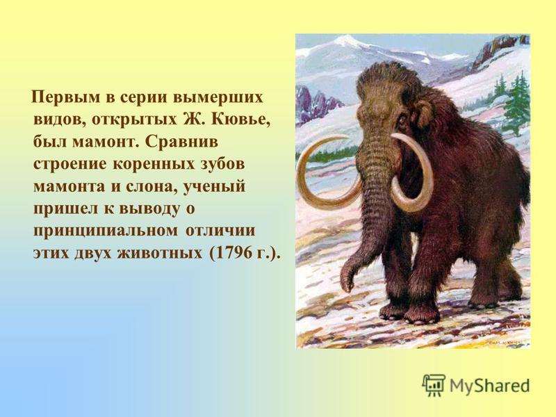 Первым в серии вымерших видов, открытых Ж. Кювье, был мамонт. Сравнив строение коренных зубов мамонта и слона, ученый пришел к выводу о принципиальном отличии этих двух животных (1796 г.).
