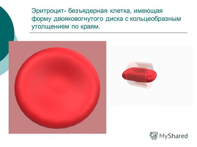 Эритроцит- безъядерная клетка, имеющая форму двояковогнутого диска с кольцеобразным утолщением по краям.