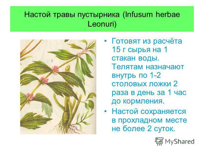 Настой травы пустырника (Infusum herbae Leonuri) Готовят из расчёта 15 г сырья на 1 стакан воды. Телятам назначают внутрь по 1-2 столовых ложки 2 раза в день за 1 час до кормления. Настой сохраняется в прохладном месте не более 2 суток.