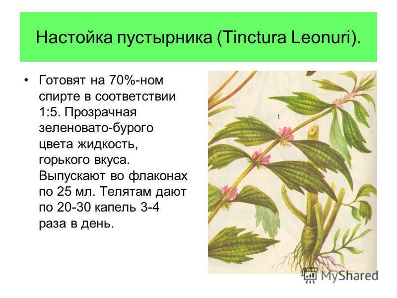 Настойка пустырника (Tinctura Leonuri). Готовят на 70%-ном спирте в соответствии 1:5. Прозрачная зеленовато-бурого цвета жидкость, горького вкуса. Выпускают во флаконах по 25 мл. Телятам дают по 20-30 капель 3-4 раза в день.