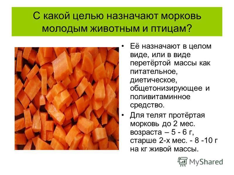 С какой целью назначают морковь молодым животным и птицам? Её назначают в целом виде, или в виде перетёртой массы как питательное, диетическое, общетонизирующее и поливитаминное средство. Для телят протёртая морковь до 2 мес. возраста – 5 - 6 г, стар