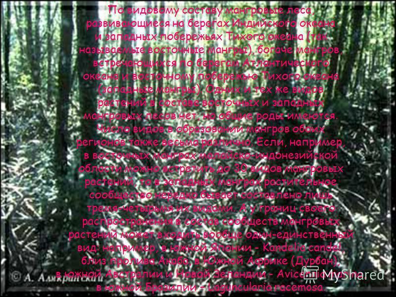 Распространение мангровых лесов не ограничено лишь областями, где господствует климат тропических дождевых лесов; там, где этому благоприятствуют теплые морские течения, мангры развиваются севернее Северного и южнее Южного тропиков. Следовательно, эт