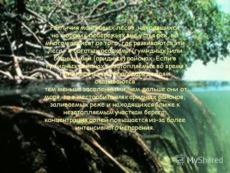 По видовому составу мангровые леса, развивающиеся на берегах Индийского океана и западных побережьях Тихого океана (так называемые восточные мангры), богаче мангров, встречающихся по берегам Атлантического океана и восточному побережью Тихого океана