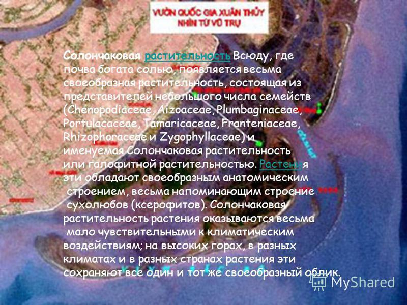 Кубомедуза Tripedalia cystophora живет на мелководье в мангровых зарослях.