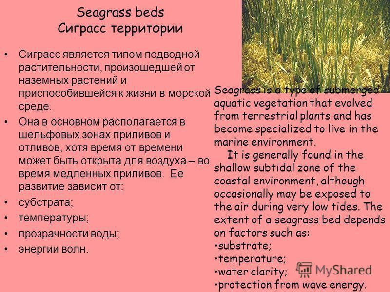 Галофитная растительность солончаковых зон