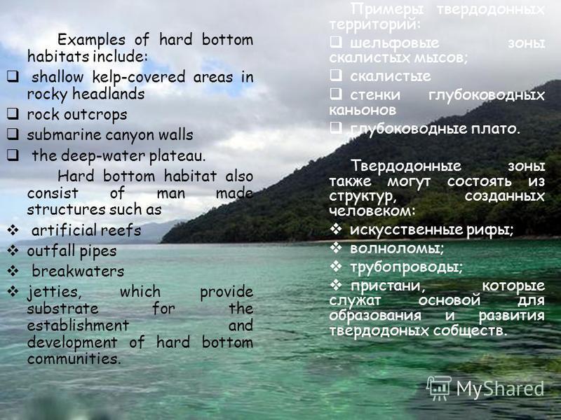 Hard bottom habitats Твердодонные морские территори Твердодонные морские территории принадлежат к областям каменного дна и окаменелостей, которые отличны от окружающих неокаменевших осевших останков. Топографический характер дна может меняться от отн