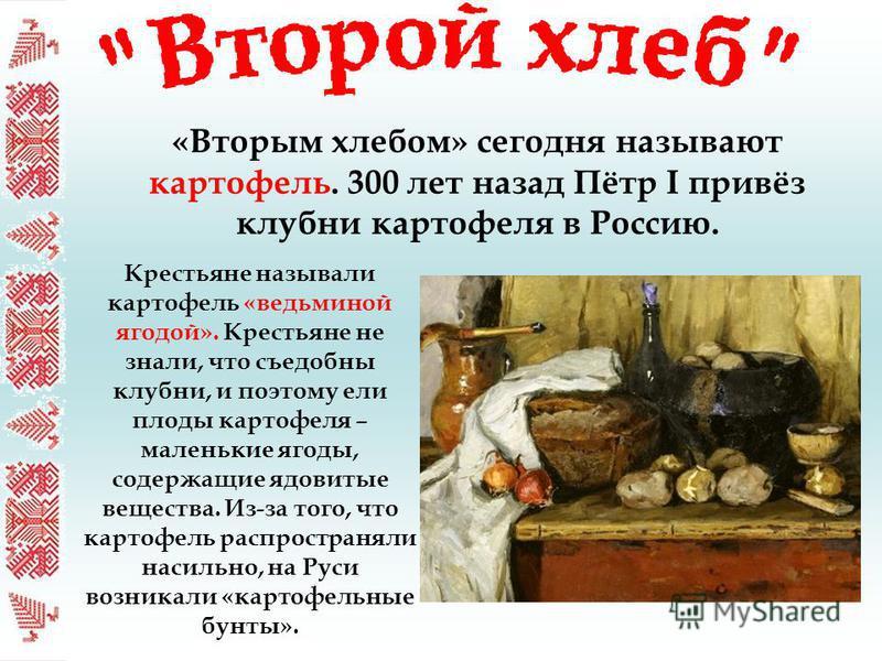 «Вторым хлебом» сегодня называют картофель. 300 лет назад Пётр I привёз клубни картофеля в Россию. Крестьяне называли картофель «ведьминой ягодой». Крестьяне не знали, что съедобны клубни, и поэтому ели плоды картофеля – маленькие ягоды, содержащие я