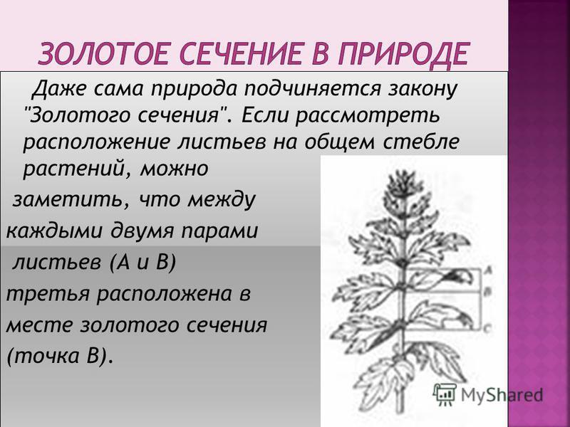 Даже сама природа подчиняется закону