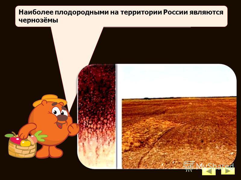 5. Какие факторы влияют на образование почв? Факторы почвообразования: материнская горная порода; рельеф; климат; растительность и животный мир.