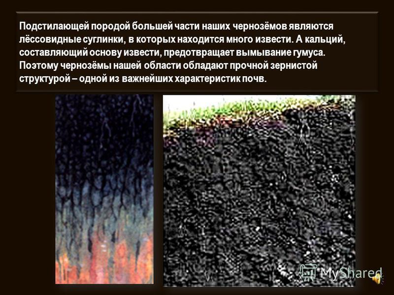Самыми богатыми по количеству необходимых питательных веществ являются предкавказские чернозёмы. Ценным свойством этих почв является то, что они очень хорошо поглощают влагу, т. е. очень хорошо промокают на большую глубину. Именно на этих почвах полу