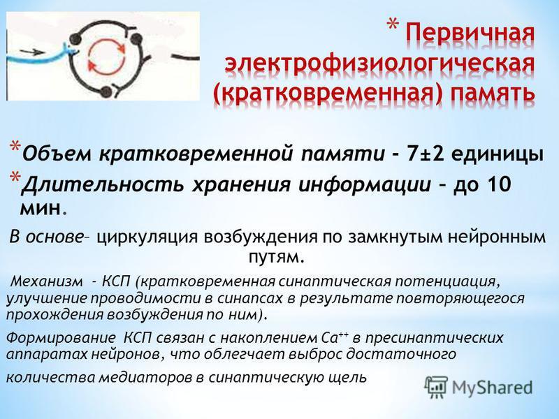 * Объем кратковременной памяти - 7±2 единицы * Длительность хранения информации – до 10 мин. В основе– циркуляция возбуждения по замкнутым нейронным путям. Механизм - КСП (кратковременная синаптическая потенциация, улучшение проводимости в синапсах в