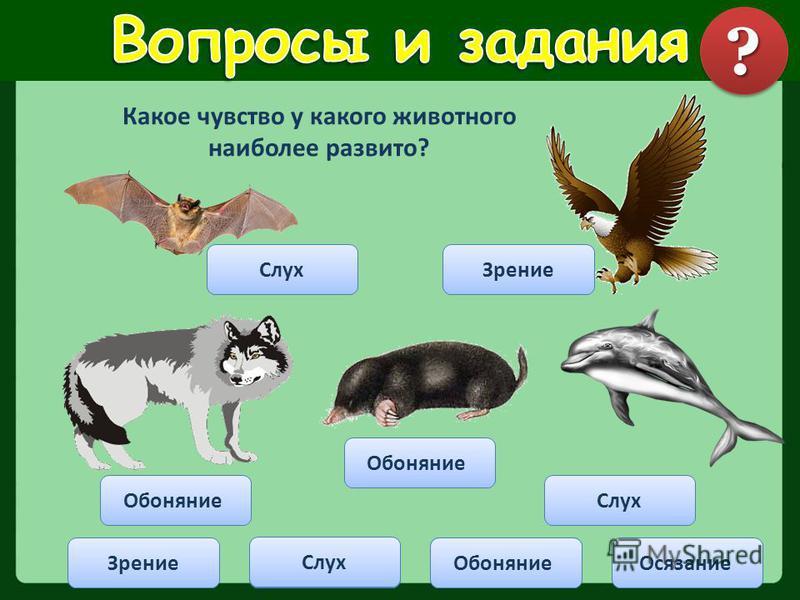 Какое чувство у какого животного наиболее развито? Зрение СлухОсязание Обоняние Слух Зрение Обоняние Слух ??