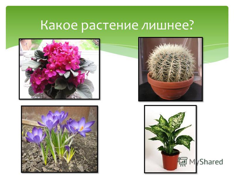 Какое растение лишнее?