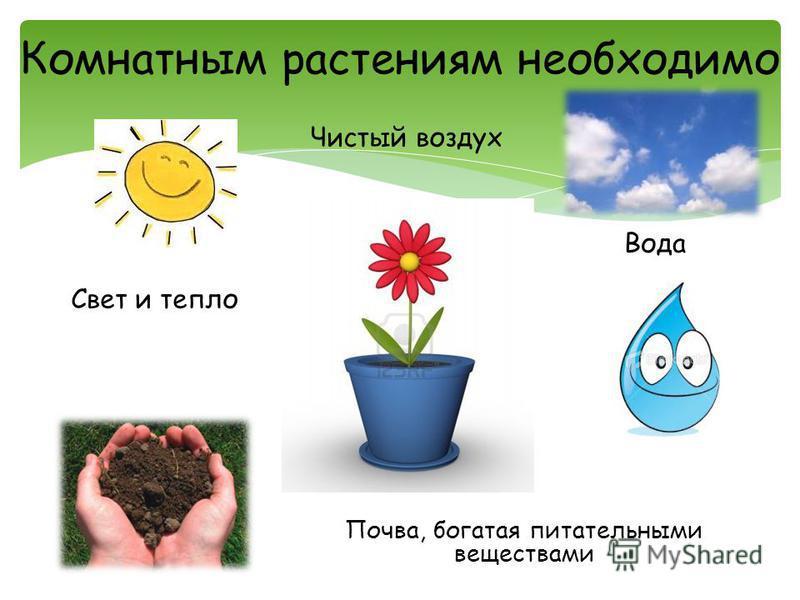 Комнатным растениям необходимо Свет и тепло Вода Почва, богатая питательными веществами Чистый воздух