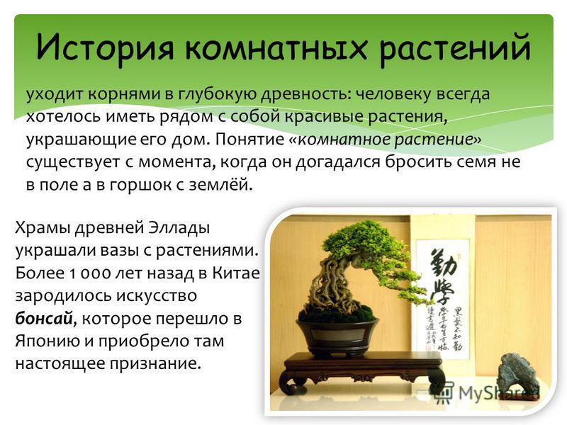 уходит корнями в глубокую древность: человеку всегда хотелось иметь рядом с собой красивые растения, украшающие его дом. Понятие «комнатное растение» существует с момента, когда он догадался бросить семя не в поле а в горшок с землёй. История комнатн