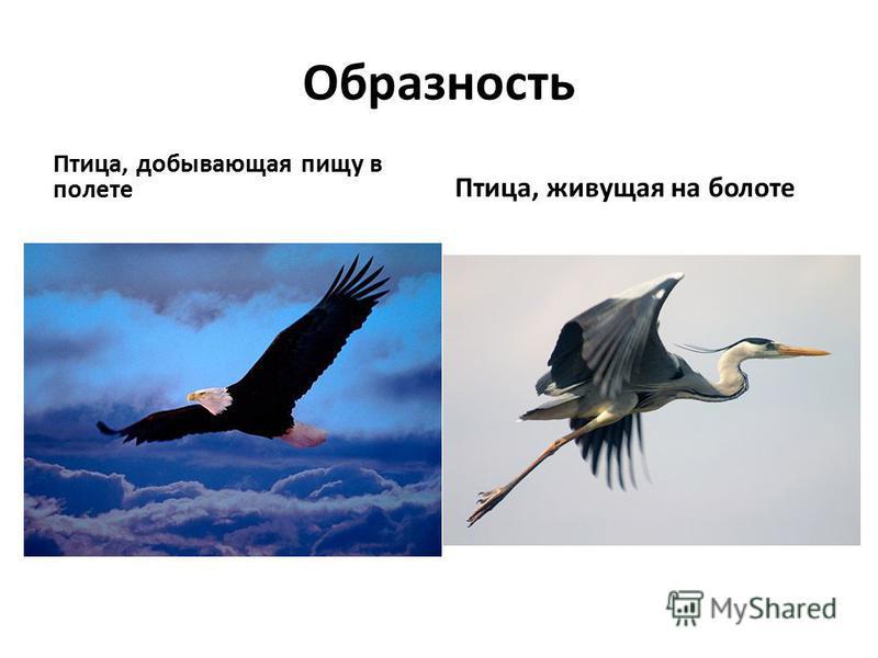 Образность Птица, добывающая пищу в полете Птица, живущая на болоте
