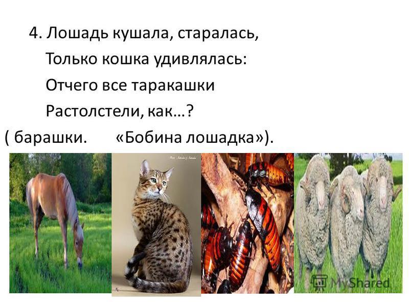 4. Лошадь кушала, старалась, Только кошкаф удивлялась: Отчего все таракашки Растолстели, как…? ( барашки. «Бобина лошадка»).