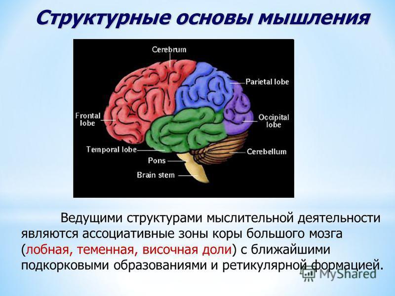 Структурные основы мышления Ведущими структурами мыслительной деятельности являются ассоциативные зоны коры большого мозга (лобная, теменная, височная доли) с ближайшими подкорковыми образованиями и ретикулярной формацией.