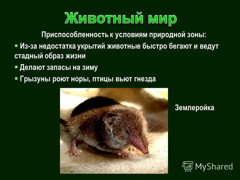 Приспособленность к условиям природной зоны: Из-за недостатка укрытий животные быстро бегают и ведут стадный образ жизни Делают запасы на зиму Грызуны роют норы, птицы вьют гнезда Землеройка