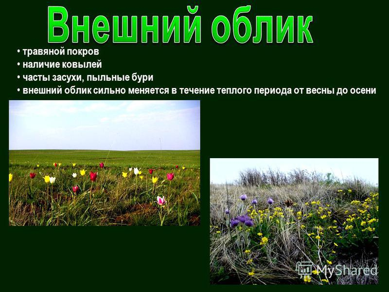 травяной покров наличие ковылей часты засухи, пыльные бури внешний облик сильно меняется в течение теплого периода от весны до осени